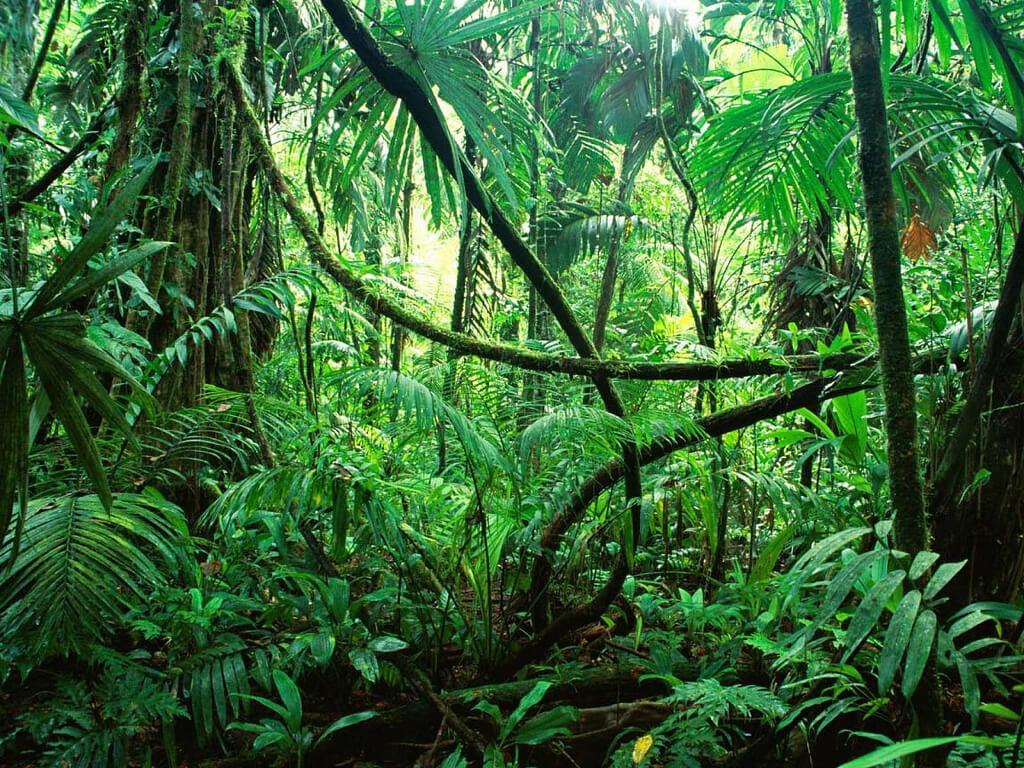 ONU e parceiros lançam curso online e gratuito sobre uso sustentável de ecossistemas